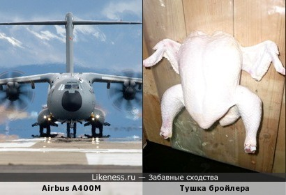 А говорят, курицы не летают...