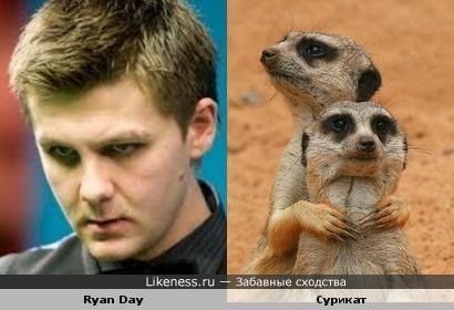 "Снукерист Ryan Day похож на суриката (Тимон из ""Король-лев"")"