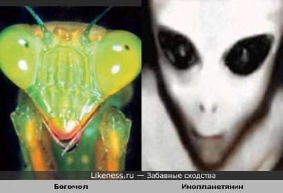 Инопланетянин вроде бы похож на богомола