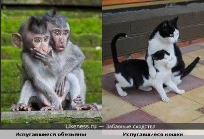 Испуг животных