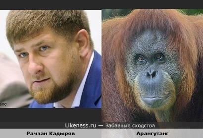 Рамзан Кадыров похож на Арангутанга