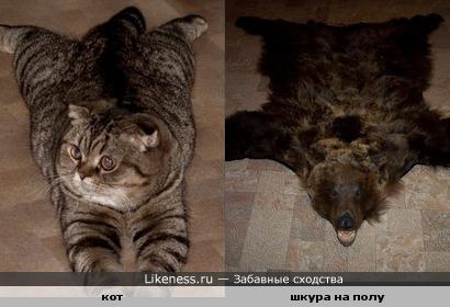 кот и шкура