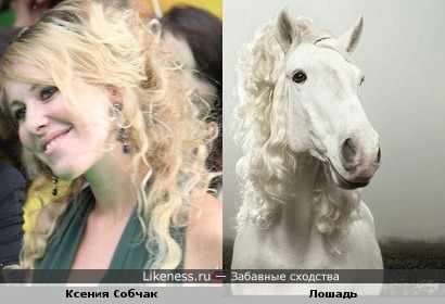 Ксения Собчак лошадь