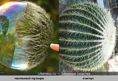 Лопающийся мыльный пузырь похож на кактус