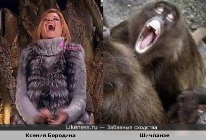 Ксения Бородина похожа на Шимпанзе
