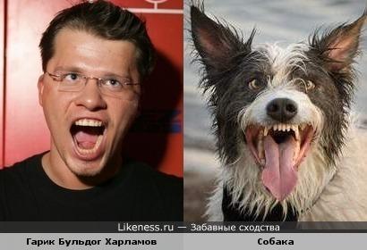 Харламов с какой-то собакой похожи