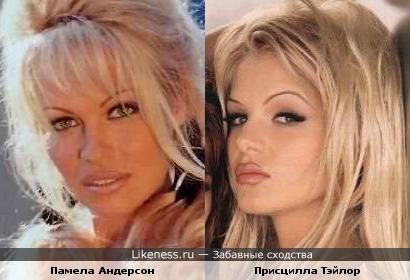 Памела Андерсон и Присцилла Тэйлор похожи