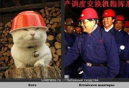 Котэ похож на китайских шахтеров