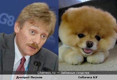 Дмитрий Песков похож на собачку БУ