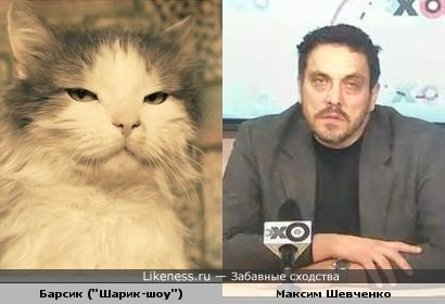 "Максим Шевченко похож на кота Барсика из ""Шарик-Шоу"""