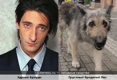 Эдриен Броуди похож на грустного пса