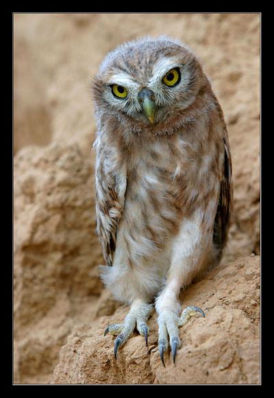 Животные. птицы.  Автор: Vadim Onishchenko. глаза.