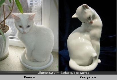 Живая кошка похожа на статуэтку