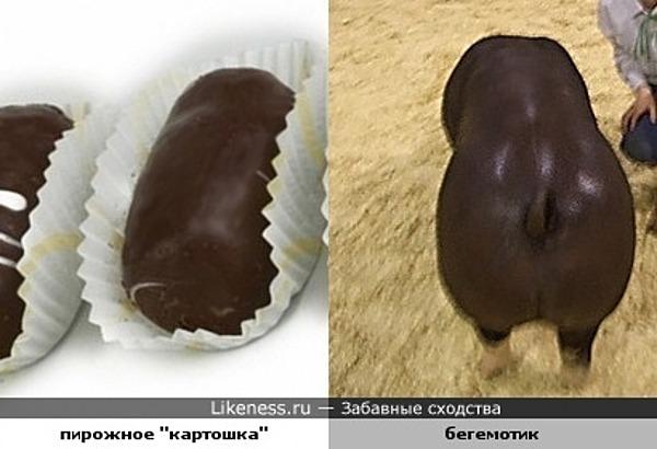 Бегемотик похож на пирожное