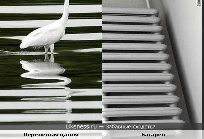 Отражение цапли в воде похоже на батарею