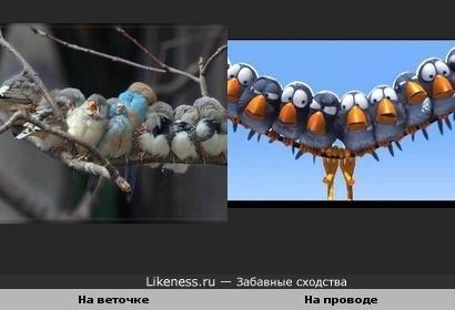 Спящие и греющиеся птички похожи на кадр из одноименного мульта студии Пиксар