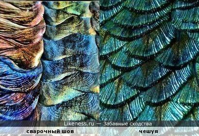 Сварочный шов и рыбья чешуя