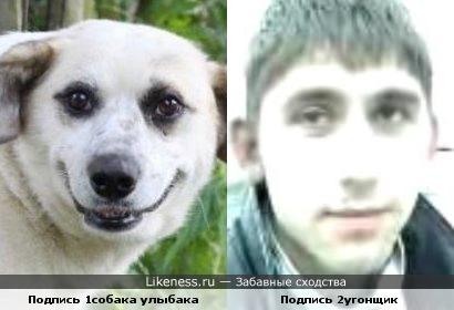 Угонщик похож на собаку- улыбаку