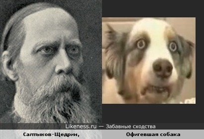 Офигевший пёс и Салтыков-Щедрин