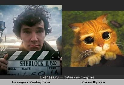 Камбербэтч похож на кота из Шрека
