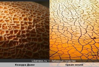 Кожура дыни похожа на сухую землю