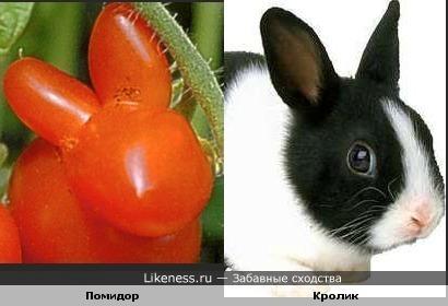 Помидор похож на кролика