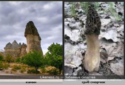 Камни древности напоминают гриб сморчок