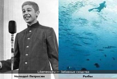 Рыбы с одной картинки напомнили Евгения Ваганыча в молодости