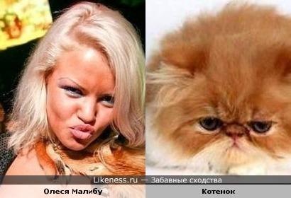 Малибу Олеся с котом похожи