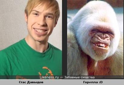 Стас вылитая горилла)))