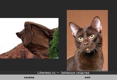 скала и кот