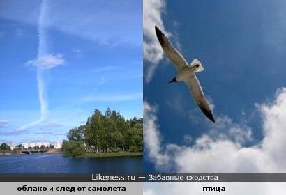 облако и след от самолета похожи на птицу в полете