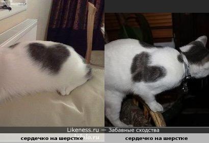 рисунки на кошках похожи на сердце