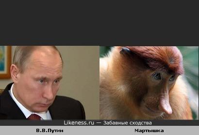 Путин похож на мартышку