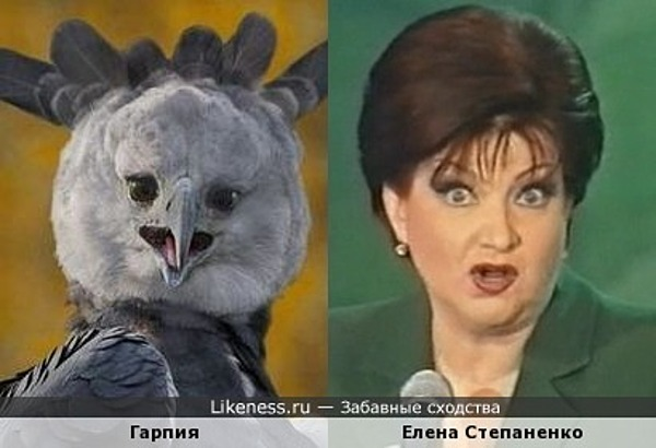 Птица гарпия напомнила Елену Степаненко