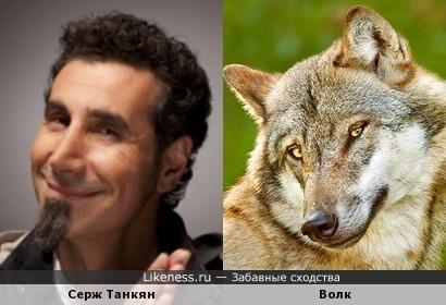 Серж Танкян похож на милого волка