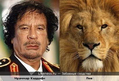 Муаммар Каддафи похож на льва