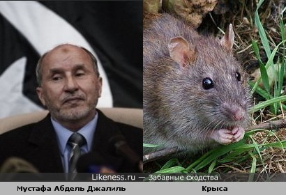 Мустафа Абдель Джалиль похож на крысу.