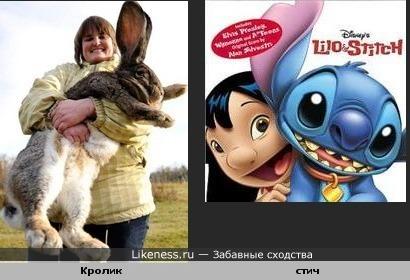 Кролик в этом ракурсе похож на стича