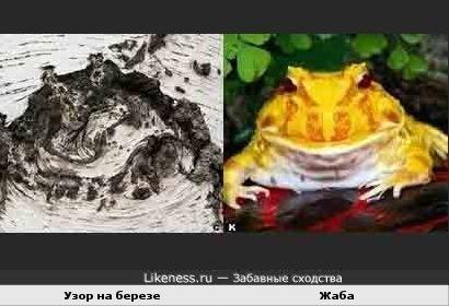 Узор на березе и жаба