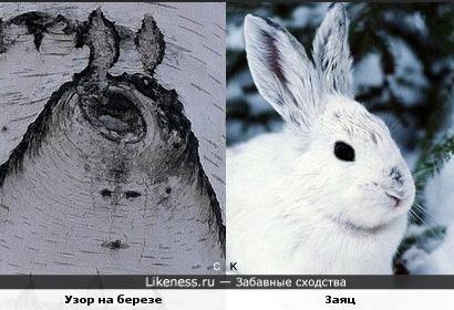Узор на березе и заяц
