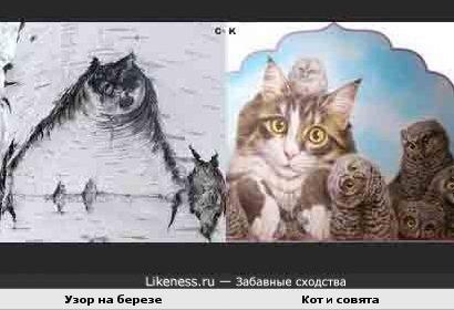 Сова и кот... и наоборот