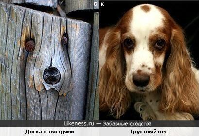 Доска с гвоздями и грустный пёс
