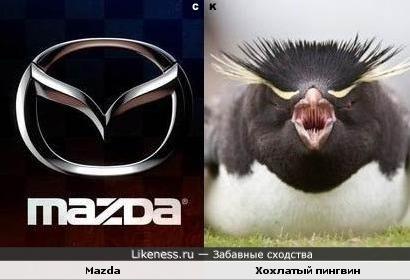 Mazda и хохлатый пингвин