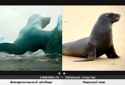 Антарктический айсберг и морской лев