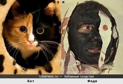 Кот напоминает Федю из новеллы «Напарник» фильма Операция «Ы» и другие приключения Шурика