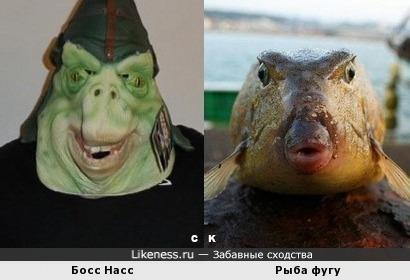 Босс Насс и Рыба фугу