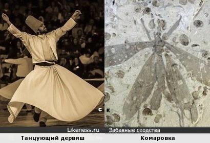 Танцующий дервиш и Комаровка
