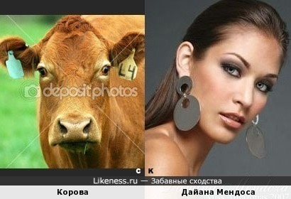 Корова и Дайана Мендоса
