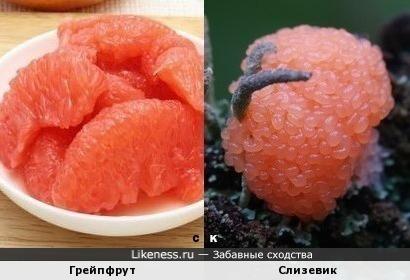 Грейпфрут и Слизевик